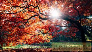 Autumn scene1920x1080